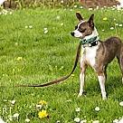 Adopt A Pet :: Gilbert