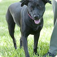 Adopt A Pet :: Mandy - Norwalk, CT