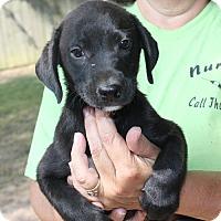 Adopt A Pet :: River - Marion, AR