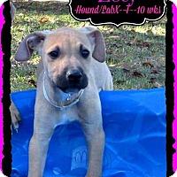 Adopt A Pet :: Zoey meet me 11/14 - East Hartford, CT