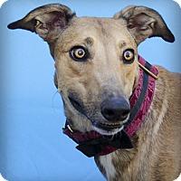 Adopt A Pet :: Watson - Seattle, WA