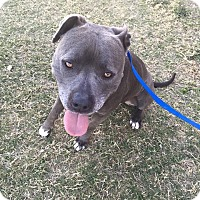 Adopt A Pet :: Ziggy - Las Vegas, NV