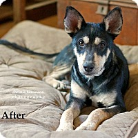 Adopt A Pet :: Tulo - Dripping Springs, TX