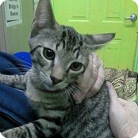 Adopt A Pet :: Luke - Trevose, PA