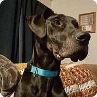Adopt A Pet :: Francine - Aurora, CO