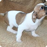 Adopt A Pet :: Becky - Umatilla, FL