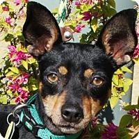 Adopt A Pet :: Rhambo - Gilbert, AZ