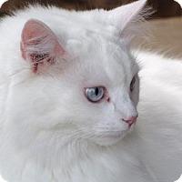 Adopt A Pet :: Suki - DFW Metroplex, TX