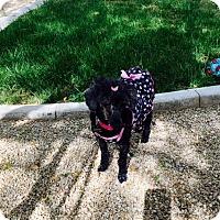 Adopt A Pet :: Mimi 2 - Las Vegas, NV