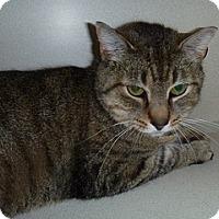 Adopt A Pet :: Purrdy - Hamburg, NY