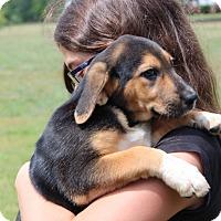 Adopt A Pet :: Parmesan - Harmony, Glocester, RI