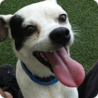 Adopt A Pet :: Stanley - Lakeland, FL