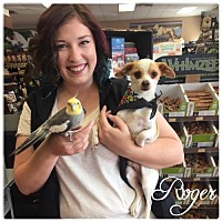 Adopt A Pet :: Roger - Hope, BC