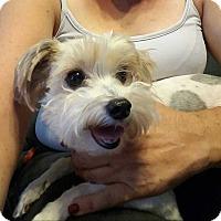 Adopt A Pet :: Jesse - E. Greenwhich, RI