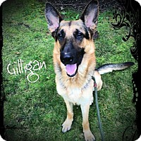 Adopt A Pet :: Gilligan - Ronkonkoma, NY