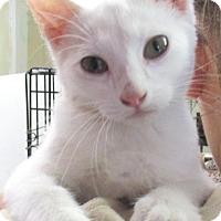 Adopt A Pet :: Ice - Reeds Spring, MO