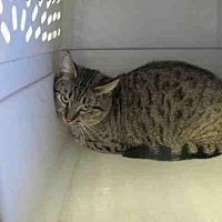 Adopt A Pet :: PINKY - Arcadia, FL