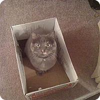 Adopt A Pet :: Hallie - Springdale, AR