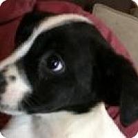 Adopt A Pet :: Mannie - Marlton, NJ