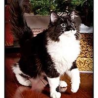 Adopt A Pet :: Charlie - Owensboro, KY