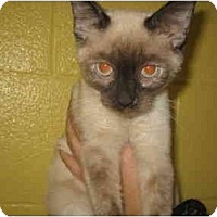 Adopt A Pet :: Keisha - Columbus, OH