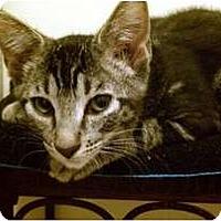 Adopt A Pet :: Jaime - San Ramon, CA