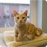 Adopt A Pet :: Chester - Modesto, CA