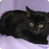 Adopt A Pet :: Mimi - Powell, OH