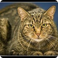 Adopt A Pet :: Stitch - Wickenburg, AZ