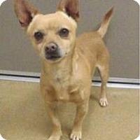 Adopt A Pet :: Puppy - Las Vegas, NV