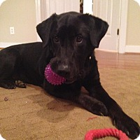 Adopt A Pet :: Kelda - Richmond, VA