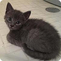 Adopt A Pet :: Cindy Jo - Merrifield, VA
