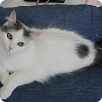 Adopt A Pet :: Emmaline - Caistor Centre, ON