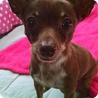 Adopt A Pet :: Laura - San Diego, CA