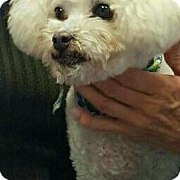 Adopt A Pet :: Biscuit - Ogden, UT