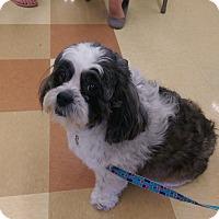 Adopt A Pet :: Penny - Ogden, UT