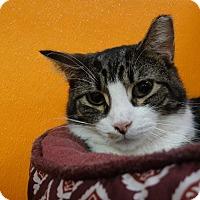 Adopt A Pet :: Chubbs - Elyria, OH