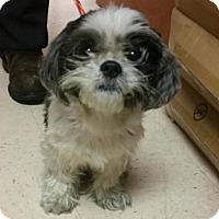 Adopt A Pet :: Lawrance - Aurora, CO
