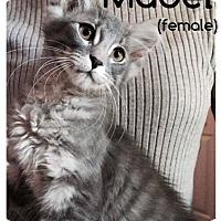 Adopt A Pet :: Mabel - Putnam, CT