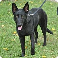 Adopt A Pet :: Tye - Mt. Airy, MD
