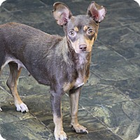 Adopt A Pet :: Sadie - Rockwall, TX