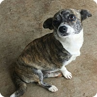 Adopt A Pet :: Thelma - Santa Ana, CA