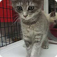 Adopt A Pet :: Carah - yuba city, CA