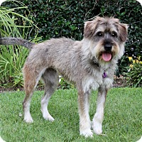 Adopt A Pet :: CASSY - Newport Beach, CA