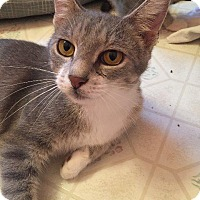 Adopt A Pet :: Momma Anna - Putnam, CT