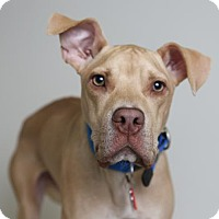 Adopt A Pet :: Blue D16096 - Edina, MN