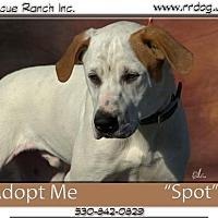 Adopt A Pet :: Spot - Yreka, CA