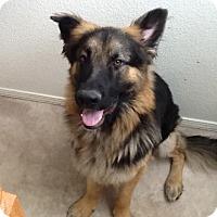 Adopt A Pet :: Salem - Sacramento, CA