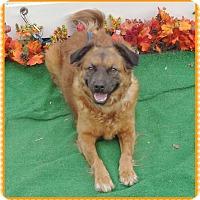 Adopt A Pet :: LILAC - Marietta, GA