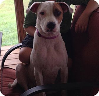 Hound (Unknown Type) Mix Dog for adoption in Forked River, New Jersey - Sophia